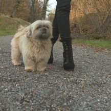Pamela Ramljak i pas (Foto: IN Magazin)