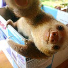Slatke životinje (Foto: brightside.me) - 14