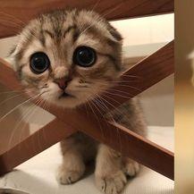 Slatke životinje (Foto: brightside.me)