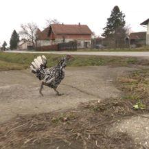 Selo Velika Pisanica (Foto: Dnevnik.hr) - 1