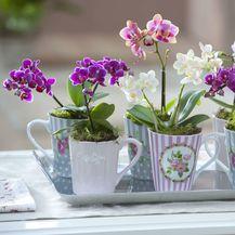 Orhideje simboliziraju ljubav