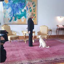 Predsjednica s kujicom Kikom (Foto: Dnevnik.hr) - 2