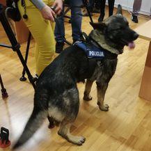 Pas Kastro riječkoj policiji pomogao u zapljeni droge