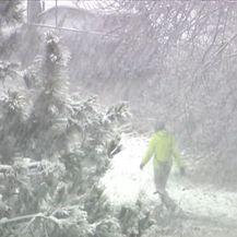 Snijeg u šumi