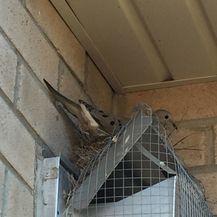 Obračun protiv ptica (Foto: Imgur) - 1
