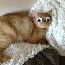 Smiješne oči (Foto: sadanduseless.com) - 14