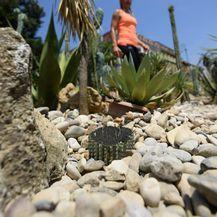 Krađa u Botaničkom vrtu (Foto: Marko Lukunic/PIXSELL) - 16