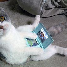 Mačke pokušavaju sjediti (Foto: sadanduseless.com) - 5