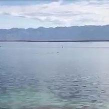 Riba je plivala u prostoru za kupače (Video: Darko Kranjec)