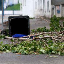 Ilustracija, srušeno stablo (Foto: Marko Prpic/PIXSELL)