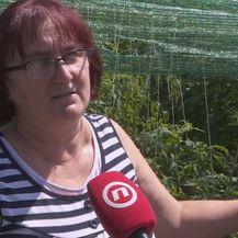 Vlasnica OPG-a Ljiljana Kolombo (Foto: Dnevnik.hr)