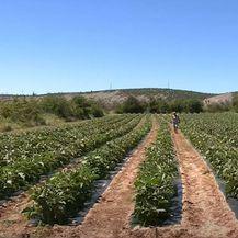 Poljoprivrednici ostavljeni sami - 3