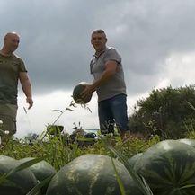Novi oblik prodaje lubenica - 2