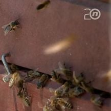 Pomor pčela, nema krivca - 2