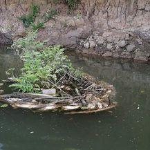 Pomor ribe u rijeci Orljavi - 2