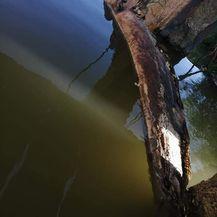 Pomor ribe u rijeci Orljavi - 4