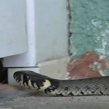 zmije - 3