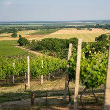 Vinarija Pinkert proizvodi oko 50.000 litara vina godišnje