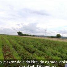 Zbog nedostatka radnika poljoprivrednicima probada urod (Video: Dnevnik Nove TV)