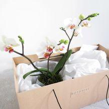 Radionica biljaka O\'bilje - 2