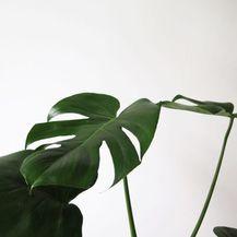 Radionica biljaka O\'bilje - 5
