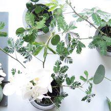 Radionica biljaka O\'bilje