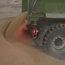 Počela žetva pšenice (Foto: Dnevnik.hr) - 2