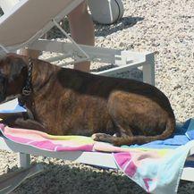 Psi na ljetovanju (Foto: Dnevnik.hr)
