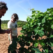 Vinogradi obitelji Roki
