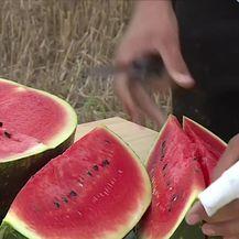 Zašto je uvozna lubenica jeftinija od domaće? (Video: Dnevnik Nove TV)
