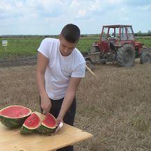 Zašto je uvozna lubenica jeftinija od domaće? (Foto: Dnevnik.hr) - 1