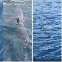 Morski pas snimljen kod Makarske (Foto: Cro2go Facebook)