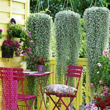 Balkon ukrasite penjačicama koje će štititi od sunca