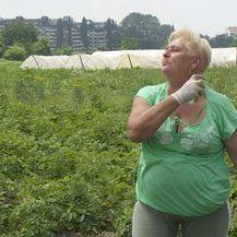 Žena se šprica sprejem protiv komaraca (Foto: Dnevnik.hr)