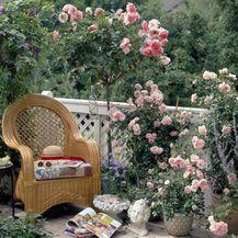 Predivan ružičnjak možete urediti i na balkonu - 3