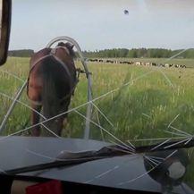 Automobil konj - 4
