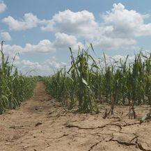 Tuča uništila poljoprivrednu kulturu - 1