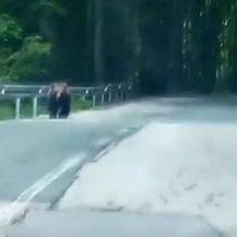 Medvjed koji je oštetio automobile