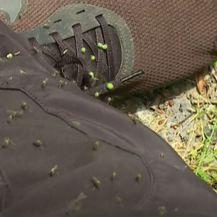 Najezda komaraca - 2