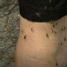 Najezda komaraca - 6