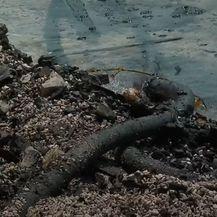 Ostaci izgorenih jahti i dalje u kaštelanskom moru - 2