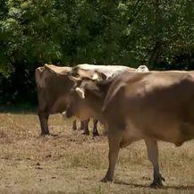 Povrat boca od mlijeka za 50 lipa: Skuplji proizvodi - 3