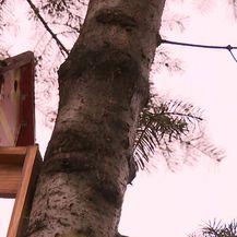 Zeničanin na stambenoj zgradi sagradio kuću (Video: Provjereno)