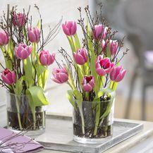 Tulipani - 3