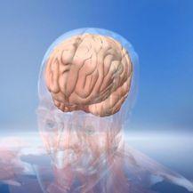 Tjedan mozga (Foto: Dnevnik.hr) - 2