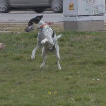 Trovanje pasa u Osijeku (Foto: Dnevnik.hr) - 1