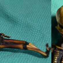 Patuljasta mumija pronađena u pustinji Atacama u Čileu (Foto: AFP) e
