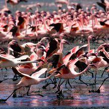 Jezero Nakuru - 4