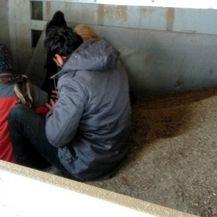 Migranti u pokušaju ilegalnog prelaska granice u Srbiji (Foto: Carina Srbije) - 2