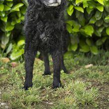 Crni psi koji u skloništu Dumovec čekaju svoj novi dom - 12